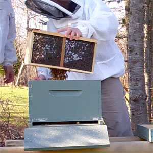 Installing a Package of Bees in Maine