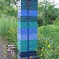 tall-hives-in-maine-june-2012-featured-image