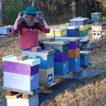 Huffington Post: Erin MacGregor-Forbes: Master Beekeeper