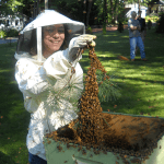 From a Book to Honey Bees: A Teenager's Journey into Beekeeping