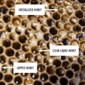 Crystallized Honey in Combs