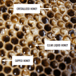 What to Do with Crystallized Honey in Combs