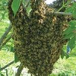 June 2013 – The Beekeepers Calendar