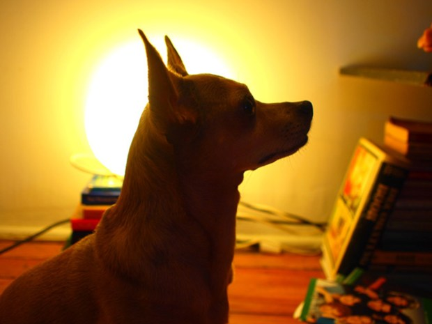 Silhouette Dog Portrait Using Illustrator