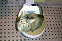Civilized Cat Toilet Training