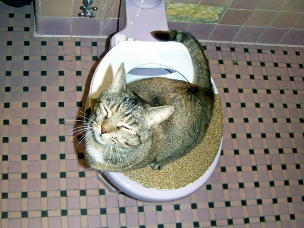 Civilized Cat Toilet&nbsp;Training