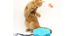 Kitty Twitty Cat&nbsp;Toy
