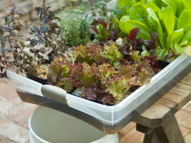 Hydroponic Veggie Garden