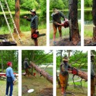 The Widowmaker: Cutting Down a Tree
