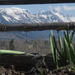 Cultivar's RainCloud