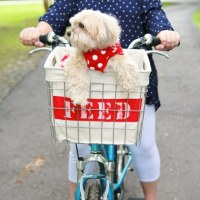 mysocalledcraftylife_upcycled_bike_basket_01