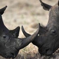 rhino_war-rhino-hunting1