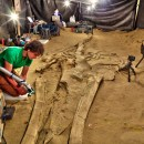The First Museum-Quality 3D-Printed Whale Fossil