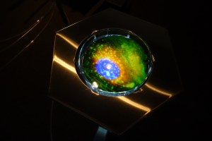 A close-up of one of the petri dishes when lit by pedal-power.