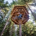 Treetop Tinkering
