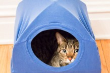 No-Sew Cat Tent from a T-shirt