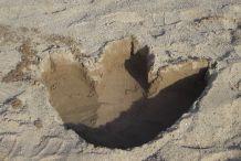 DIY Dinosaur Footprints