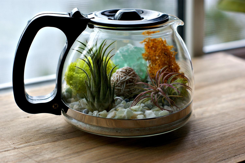 Decoration Jardin Petit Budget : Diy terrarium coffee pot
