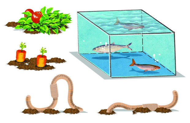 Build an aquaponic garden with arduino gardening make for Balcony aquaponics