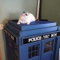 astromark_cat_tardis1