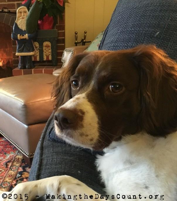 Ivy enjoys a 'dog's life'....
