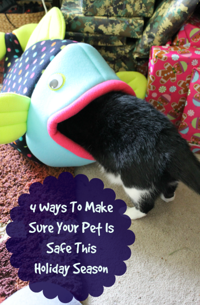 4 Ways To Make Sure Your Pet Is Safe This Holiday Season