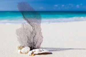 beach-84565_960_720