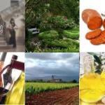 El miércoles continúan las propuestas de los Wine Days Mallorca