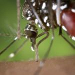 Se confirman esta semana cinco nuevos casos de Zika en Baleares, llegando a 237 en España