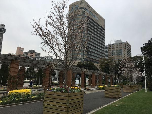 山下公園コンテナ桜