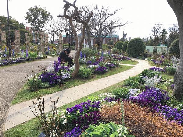 港の見える丘公園イングリッシュローズの庭