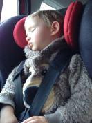 Tiring day - Georgie!