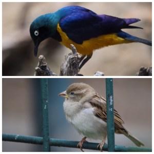 zoo berlin vogelhaus