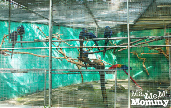 Macaw Cage
