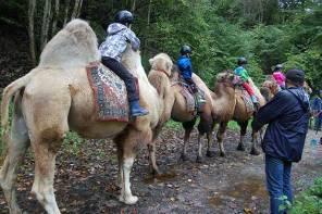 Halt inne, reite Kamel & backe! My very first Freitagslieblinge