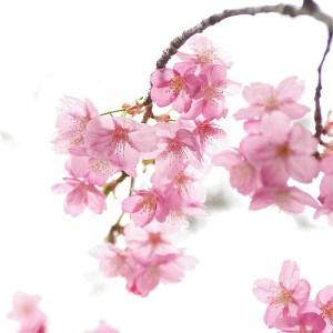 цветы жен