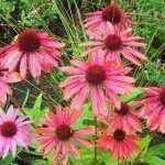 Best autumn flowering plants
