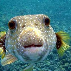 nabasan reef dive site subic bay