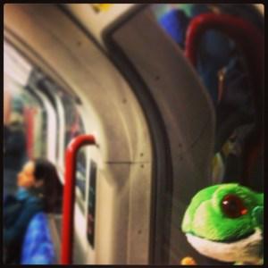 Follow the Frog Week for Rainforest Alliance