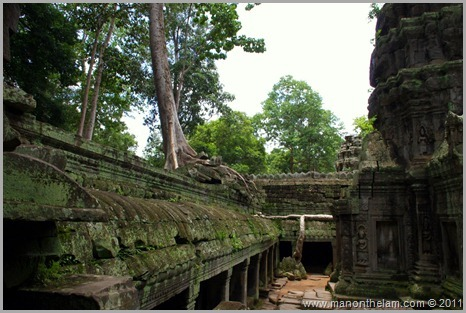 Ta Prohm, Angkor, Siem Reap Province, Cambodia