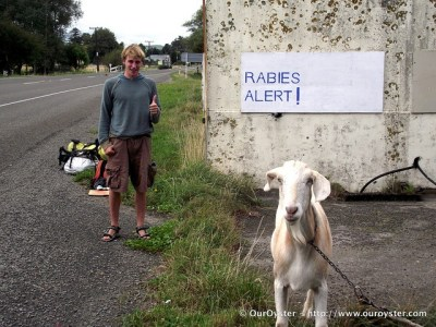 Our Oyster Rabies Alert Sign New Zealand Travel Photo Roulette