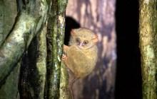 Manado, Monkeys and Moonshine