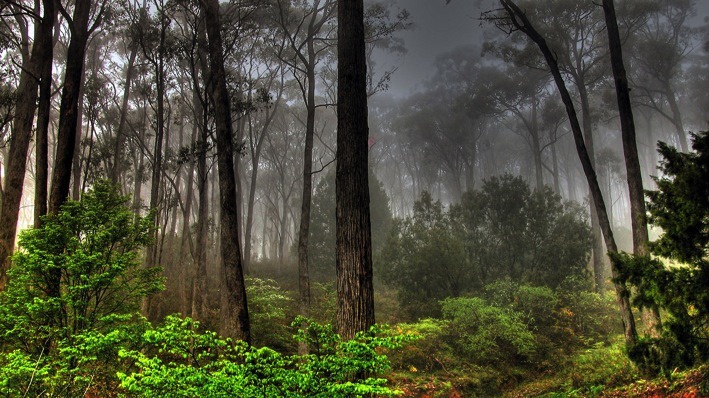 Amazon jungle rainforest