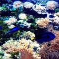 Corais no norte da Austrália
