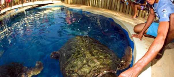 Bahia, tartarugas