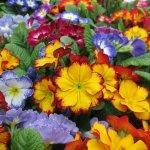 beddingflowers