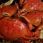 Heavy Crabs!
