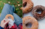 Cider Donuts at Orchard Hill Farm