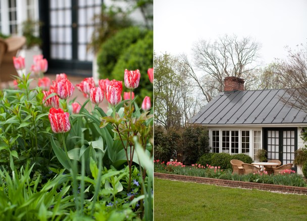Tulips at Clifton Inn
