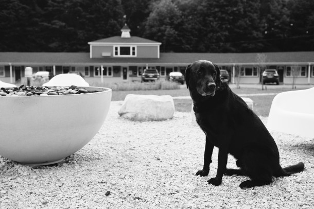 Pet Friendly Briarcliff Motel